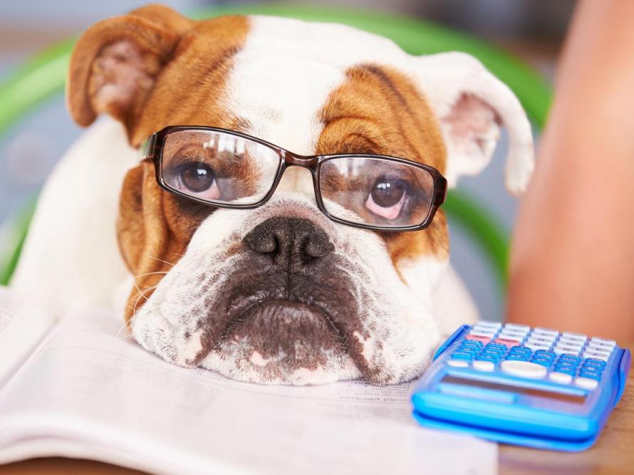 bulldog-calculadora_0