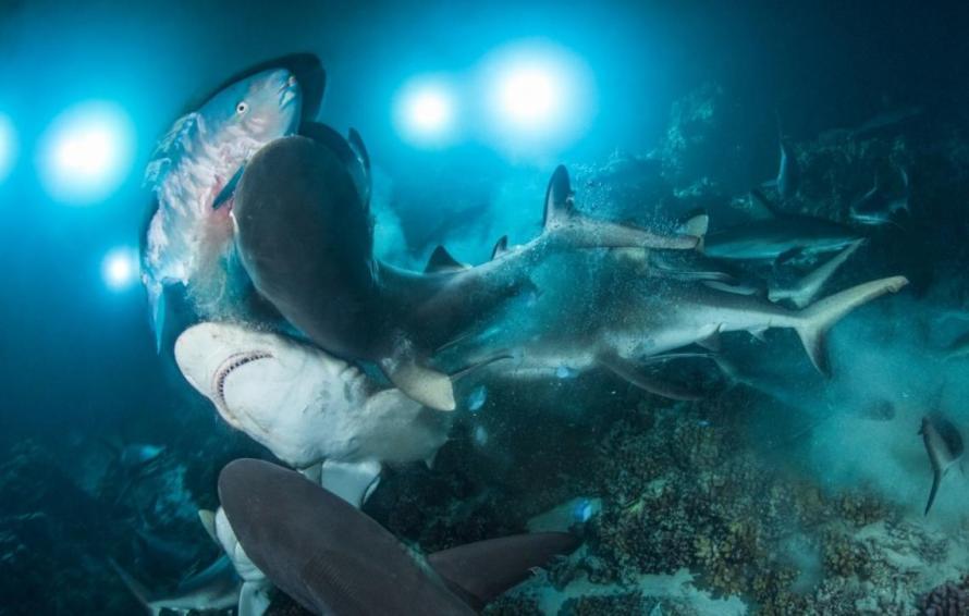 galeria-underwater_0