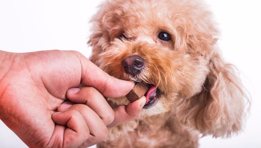 bigstock-hand-feeding-pet-dog-with-chew-262932352-1